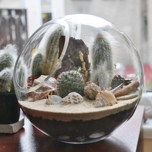 kaktüs-bahçesi-3-indirimkodu